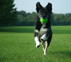 Healthy Dog Stem Cell Therapy